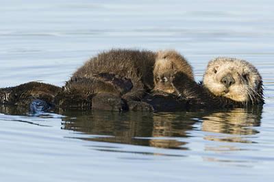 Otter Photograph - Sea Otter Mother And Pup Elkhorn Slough by Sebastian Kennerknecht