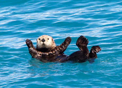 Otter Photograph - Sea Otter by Phil Stone