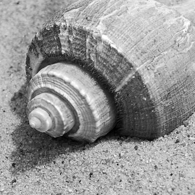 Limulus Polyphemus Photograph - Sea Shell by Charles Harden