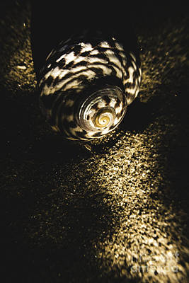 Hiding Photograph - Sea Shell In Darkness by Jorgo Photography - Wall Art Gallery