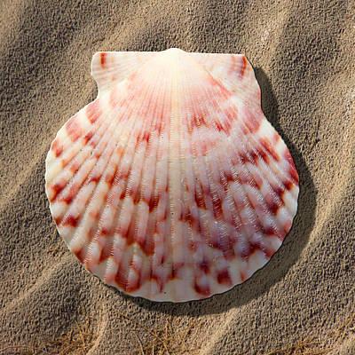 Sea Shells Digital Art - Sea Shell by Mike McGlothlen