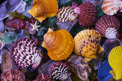 Sea Shells And Sea Glass Print by Garry Gay