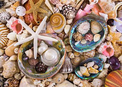 Conch Photograph - Sea Shells by Jim Hughes