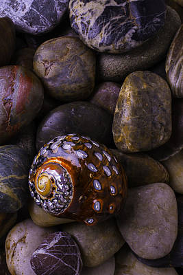 Sea Snail Shell On Rocks Print by Garry Gay