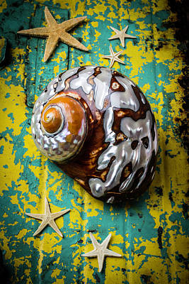 Shell Texture Photograph - Sea Snail Shell With Stars by Garry Gay
