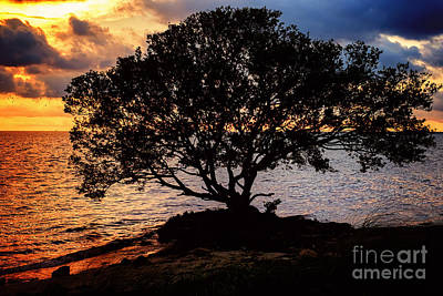 Photograph - Sea Tree by Eyzen Medina