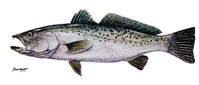 Painting - Sea Trout by Kevin Brant