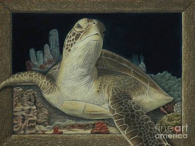 Turtle Drawing - Sea Turtle by Jennifer Watson
