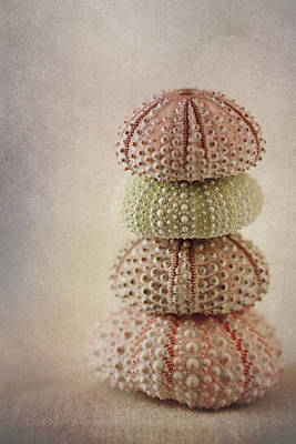 Rectangles Photograph - Sea Urchins by Carol Leigh