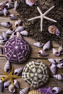 Sea Urchins With Starfish Print by Garry Gay
