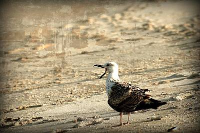 Seagull 2 - Jersey Shore Print by Angie Tirado