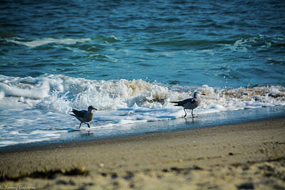Photograph - Seagull Beach Feeding by Tommy Anderson