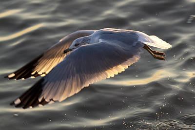 Seagull Flight Original by Dustin K Ryan