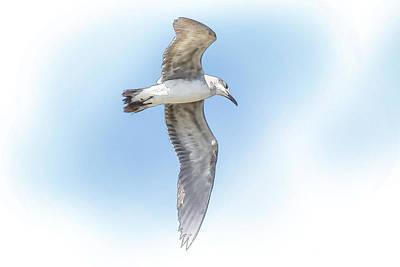 Bird Photograph - Seagull Flight-sanibel Island-digital by J Darrell Hutto