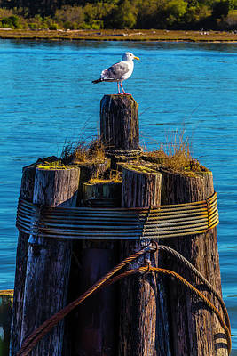 Seagull On Pilings  Print by Garry Gay