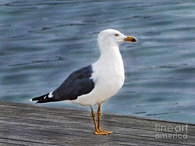 Seagull Portrait Print by Sue Melvin