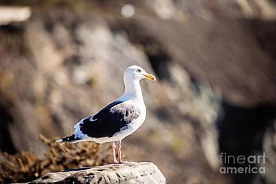 Photograph - Seagull by Scott Pellegrin