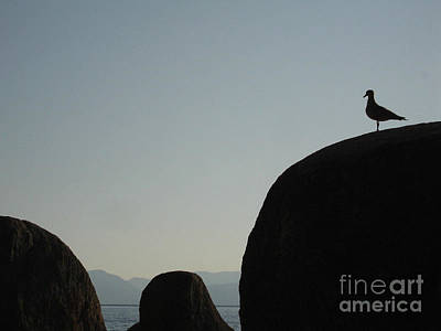 Seagull Silhouette Print by Silvie Kendall