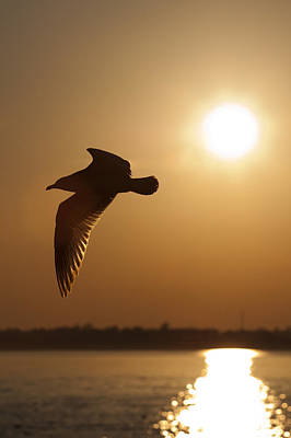 Seagull Sunset Original by Dustin K Ryan
