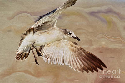 Flying Seagull Painting - Seagull Swirl by Deborah Benoit
