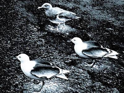 Friendly Digital Art - Seagull Trio by Will Borden