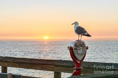 Wet Fly Digital Art - Seagull Watching The Sunset by Eddie Yerkish