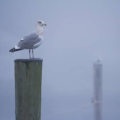 Seagulls On Pilings In Mystic Ct Print by Kirkodd Photography Of New England