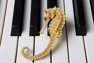 Seahorse On Keys Print by Garry Gay