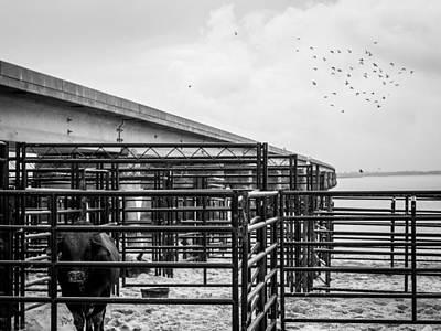 Of Rodeo Bucking Bulls Photograph - Seascape Bsl E50b by Otri Park