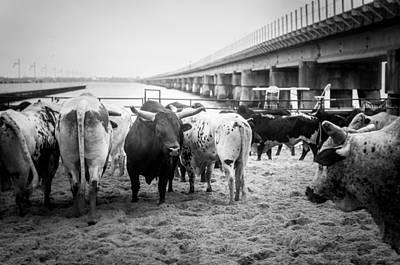 Of Rodeo Bucking Bulls Photograph - Seascape Bsl E50j by Otri Park