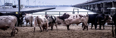 Of Rodeo Bucking Bulls Photograph - Seascape Bsl E50v by Otri Park