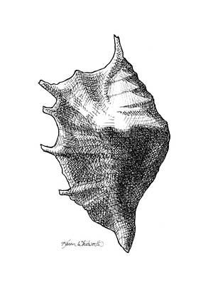 Seashell 1 - Nautical Beach Drawing Print by Karen Whitworth