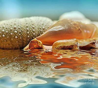 Seashell Reflections On Water Print by Kaye Menner