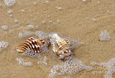 Seashells And Bubbles 2 Print by Kaye Menner