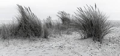Beach Landscape Mixed Media - Seashore Grass by Svetlana Sewell