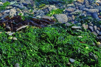 Photograph - Seaweed by Tikvah's Hope