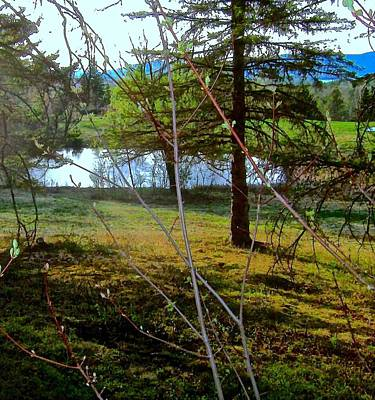 Mountain Photograph - Secluded Pond by Elizabeth Tillar