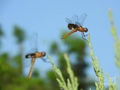 Dragonfly Photograph - Seeing Double by Tracy Habenicht