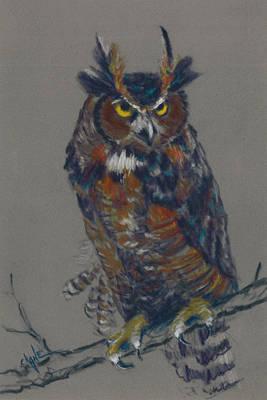 Seeking Owl  Print by Christine Camp