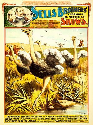 Ostrich Drawing - Sells Brothers' Circus Poster 2-1 by MMG Archives