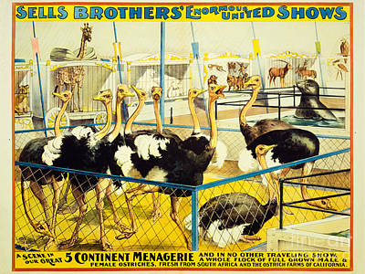 Ostrich Drawing - Sells Brothers' Circus Poster 2-5 by MMG Archives