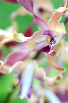 Sensual Touch Of Exotic II. Orchid II Print by Jenny Rainbow