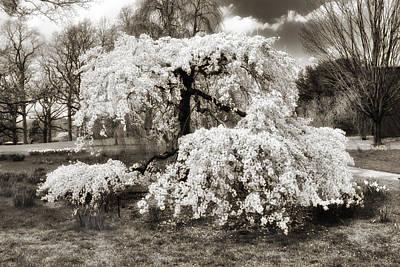 Spring Landscape Digital Art - Sepia Cherry by Jessica Jenney