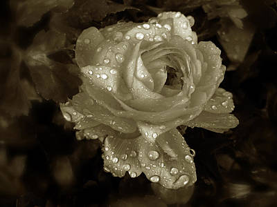 Duotone Photograph - Sepia Rose by Jessica Jenney