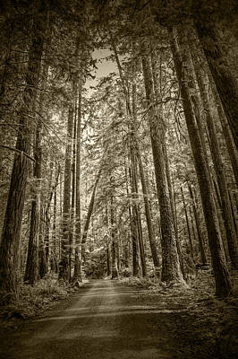 Sepia Tone Of A Rain Forest Dirt Road Print by Randall Nyhof