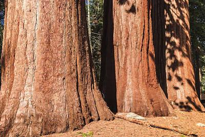 Sequoia Print by Muhie Kanawati