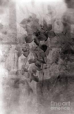 Avantgarde Photograph - Serenade by Susanne Van Hulst