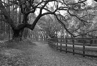 Serpentine Stroll II Original by Suzanne Gaff