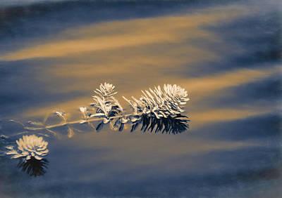 Photograph - Set Apart by Carolyn Marshall