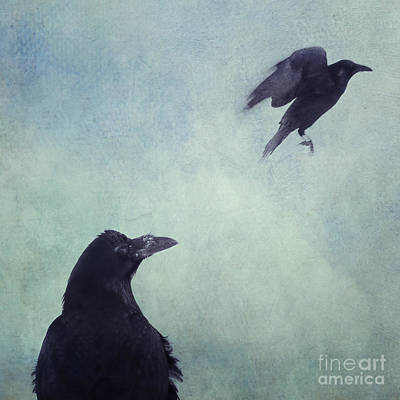 Crow Photograph - Set Your Mind Free by Priska Wettstein